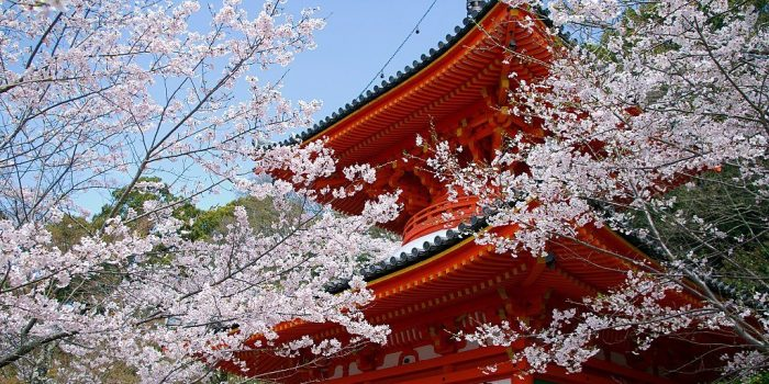 Kimii Dera Temple With Cherry Blossoms) 02 Apr, 2016 Panoramio