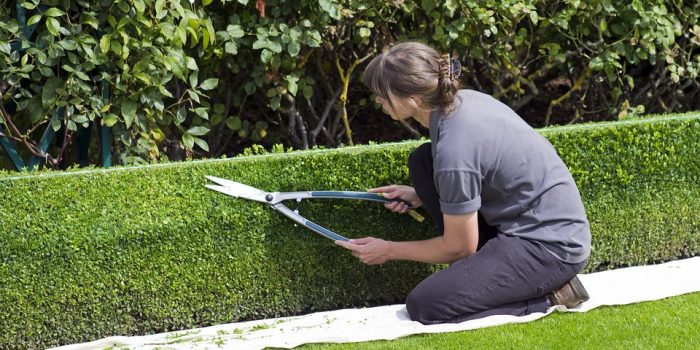 Box Hedge Topiary 869073 960 720